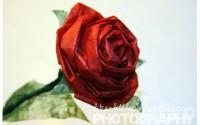 rose di carta faidate