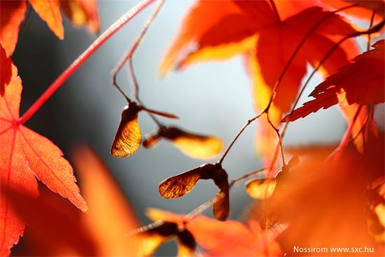idee creative autunno