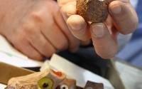 civetta-ceramica