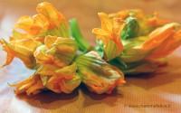 fiori-zucca