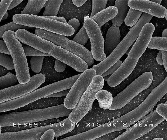 prevenzione e sicurezza contro escherichia coli