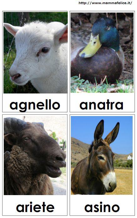 carte tematiche animali fattoria