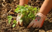 Perché scegliere cibi biologici per i bambini?