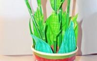 pianta-colorina