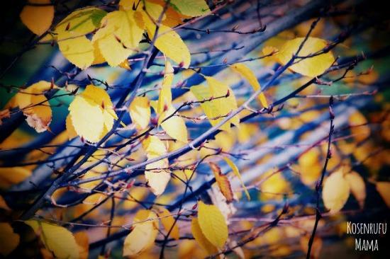attivita in autunno per bambini