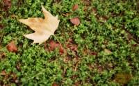 ritmo autunno in famiglia