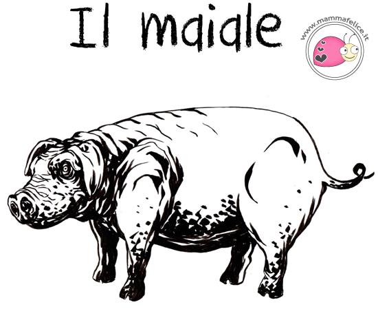 come-disegnare-un-maiale