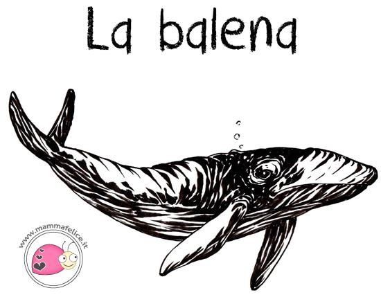 come-disegnare-una-balena