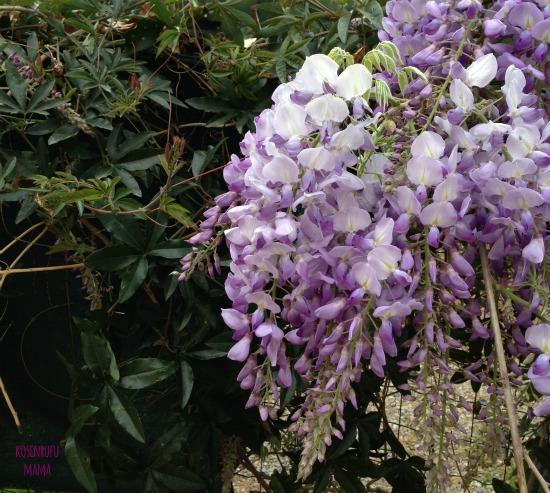 disintossicare organismo primavera cambio stagione