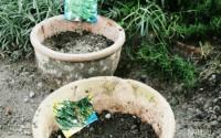 relax e giardinaggio