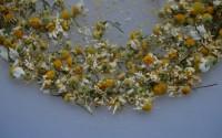 Conservare le erbe spontanee: fiori e piante aromatiche