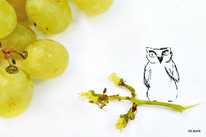 disegnare con fantasia riciclo raspo d'uva gufo su ramo