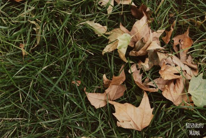 lavoretti autunnali con cera e foglie secche
