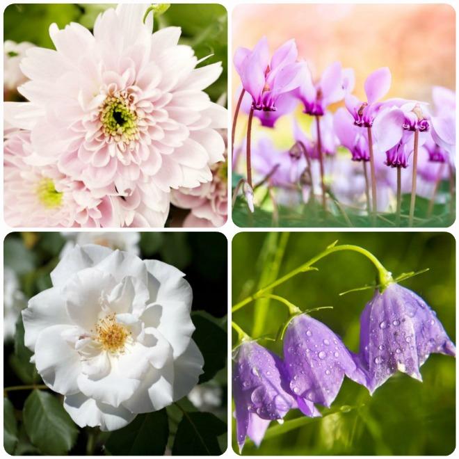 significato-fiori