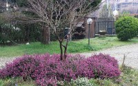 primavera-rinnovamento-pensieri-felici-trovare-felicita