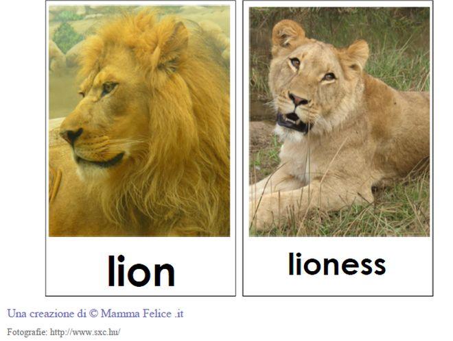 carte-tematiche-animali-della-savana-inglese
