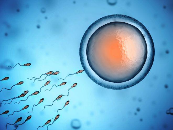 fertility-day-periodo-fertile-welfare-conciliazione-lavoro-famiglia