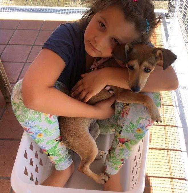 tenere-pulita-ordinata-profumata-casa-con-cane-animali