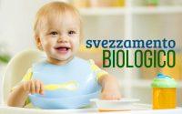 svezzamento-biologico
