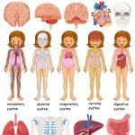 Studiare il corpo umano con i bambini, Metodo Montessori