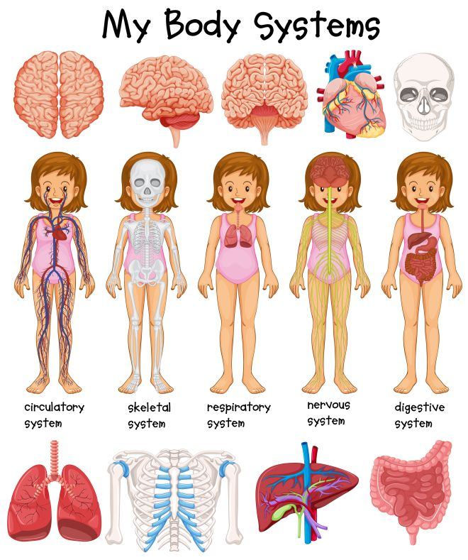 Bien connu Studiare il corpo umano con i bambini, Metodo Montessori | Mamma  BT87