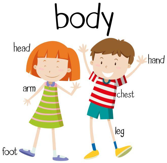 Ben noto Studiare il corpo umano con i bambini, Metodo Montessori | Mamma  WO74