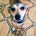Norme igieniche per chi ha un cane in casa