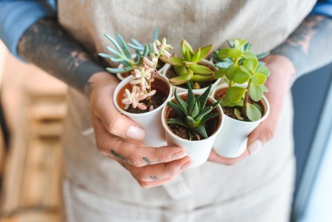 piante-grasse-appartamento-come-curarle-annaffiarle