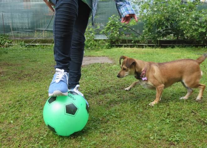 consigli utili per chi ha un cane in casa