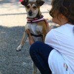 10 consigli utili per prendersi cura del proprio cane